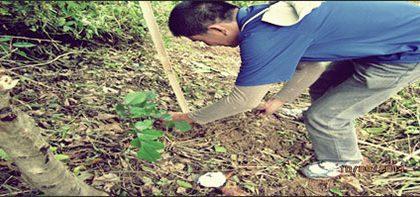 Herald Tree Planting